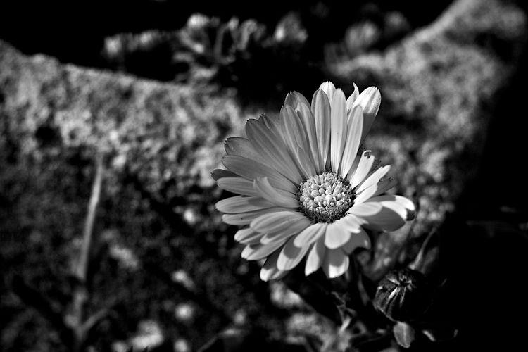 Botanical Monochrome 5594 - flowerphotography - dorian-stretton | ello