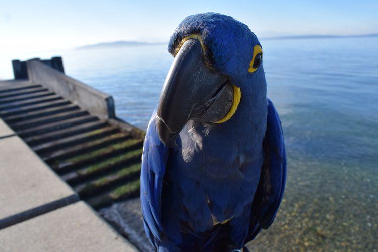Portrait Parrot, Part Trois. Hy - michaelostrogorsky | ello