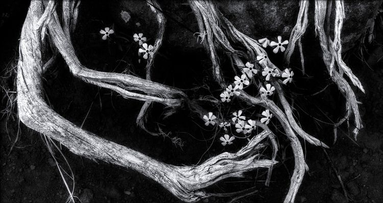 flowers 9,000 feet Ashley Natio - docdenny | ello