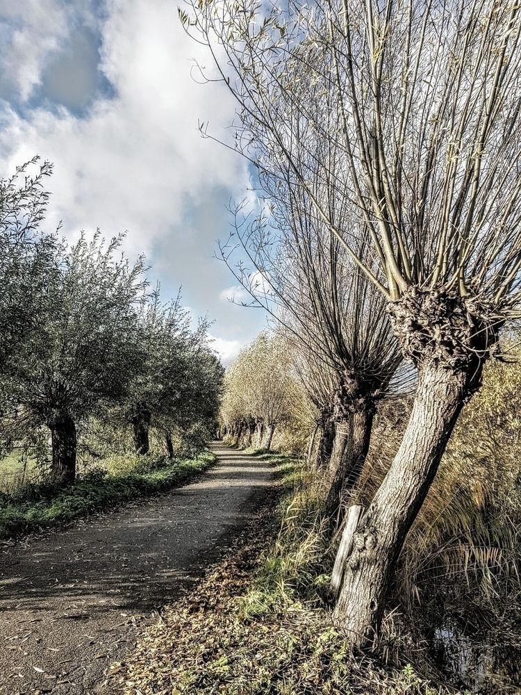 Today nice walk noticed road tr - rvdkimmenade | ello