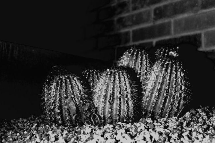 Desert life, Az 2018 - cactusforever - moii   ello