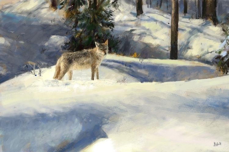 Coyote Photo study - mujkicharis | ello