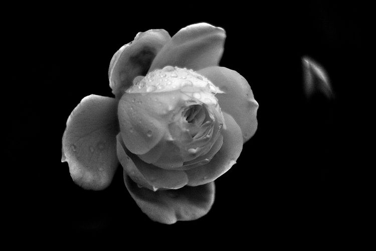 Botanical Monochrome 5638 - flowerphotography - dorian-stretton | ello