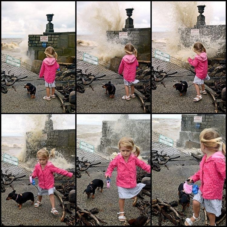 crashing wave - photography, dachshund - kenlong   ello
