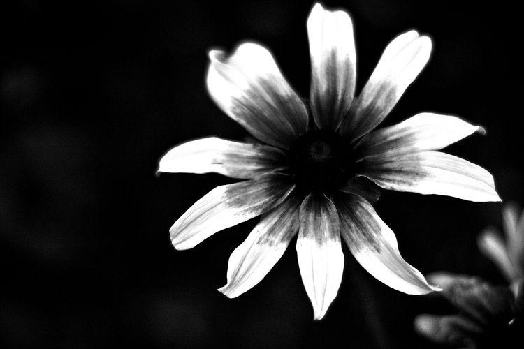 Botanical Monochrome 5658 - flowerphotography - dorian-stretton | ello