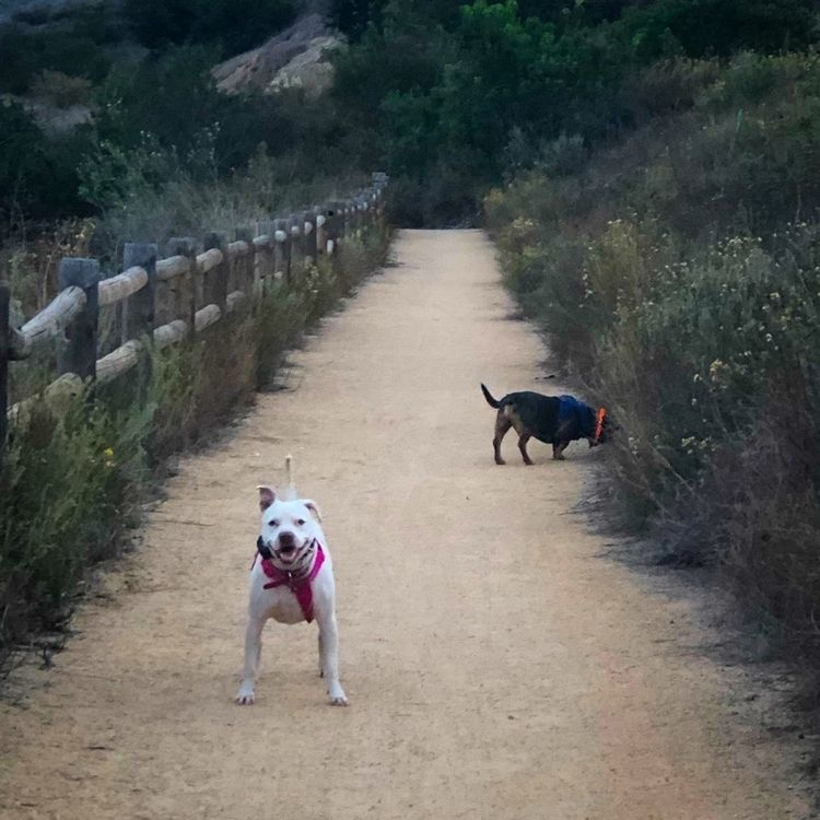 paths trails hike share adventu - alexgzarate | ello