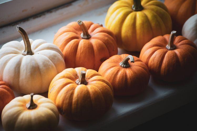 Pumpkins window light - pumpkins - vincentvicari | ello