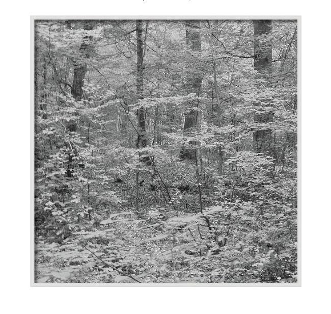 places quiet churches, woods, l - martinarall | ello