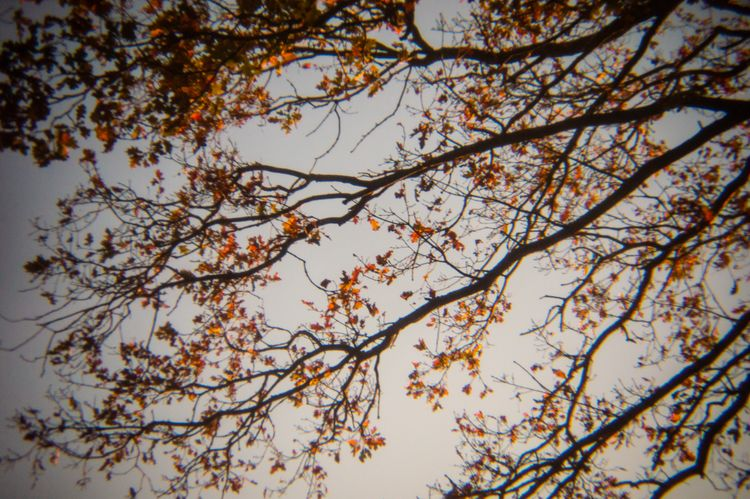 Holga Nature - 2, photography, nature - davidhawkinsweeks | ello