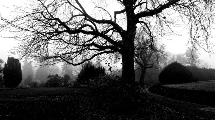 funeral. grey, foggy morning. r - countyhell | ello