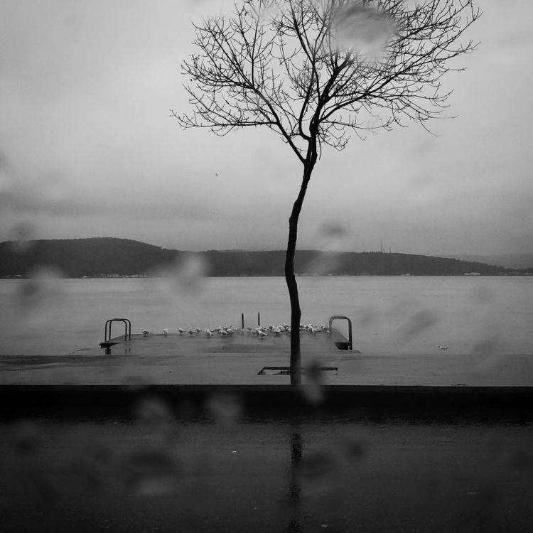 sea, bnw, blackandwhite, rain - gepetdo | ello
