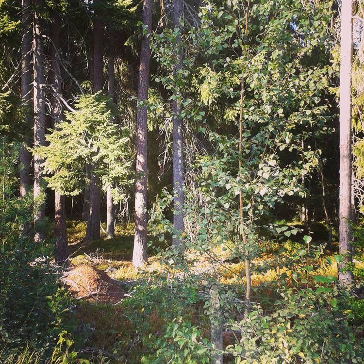 Hovshaga Begravningsplats ~ Väx - skogskyrkogardar | ello