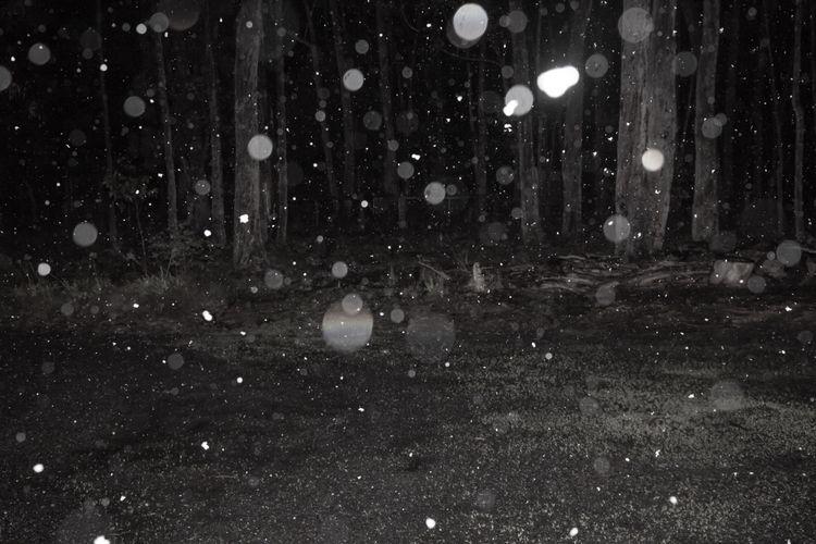 backyard, blackandwhite, bnw - jokalinowski_ | ello