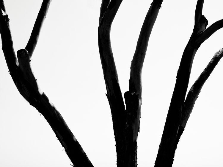 Live roots, branches - blackandwhite - bkleemann | ello