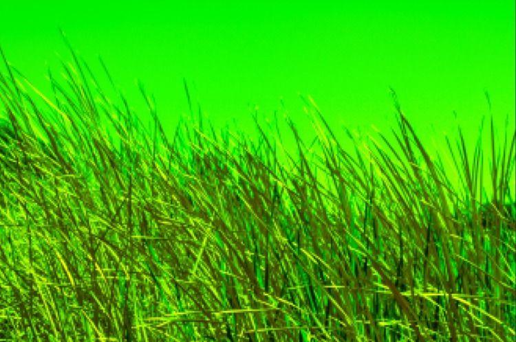 easy green - sacrecour | ello