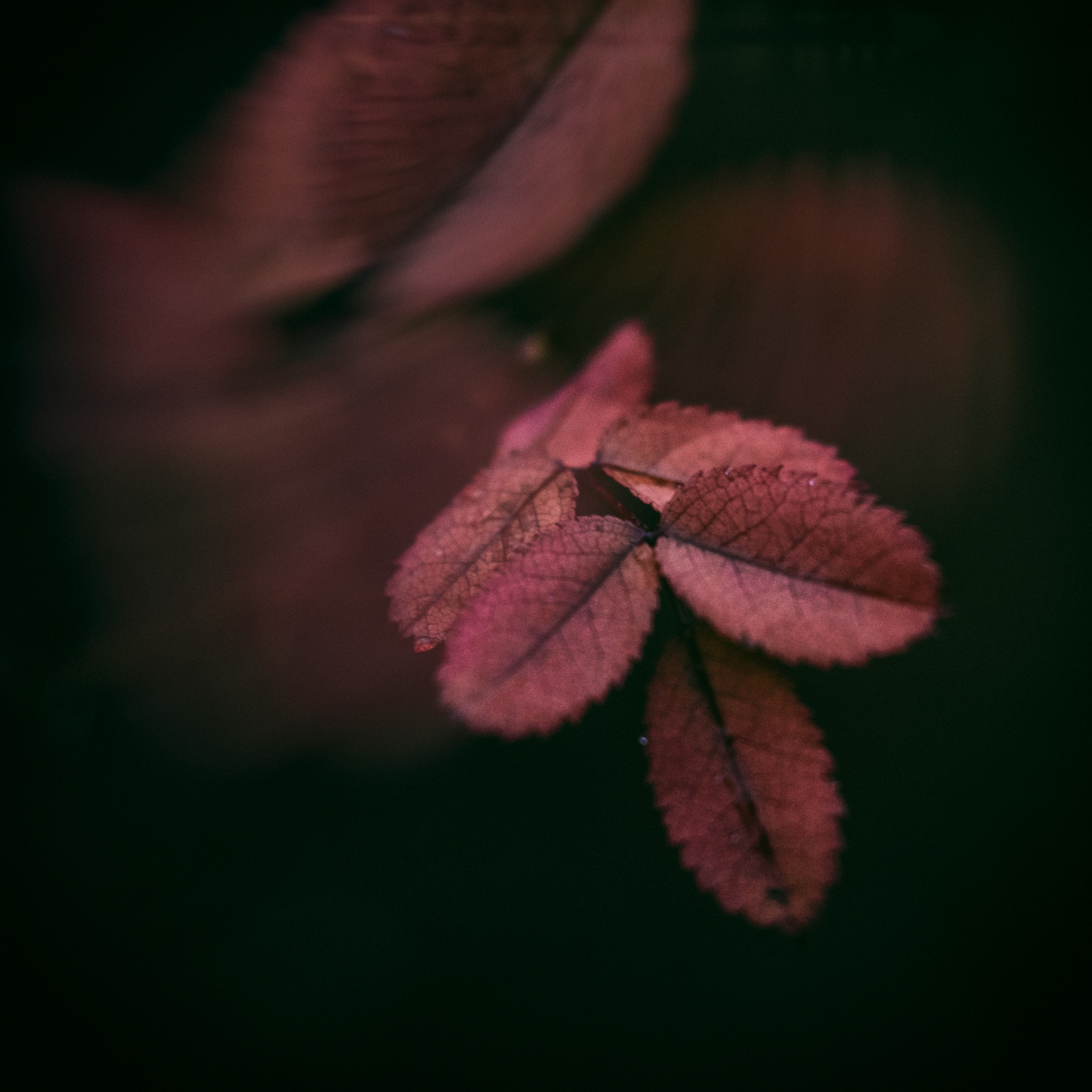 Searching color grey day - nature - peter_skoglund | ello