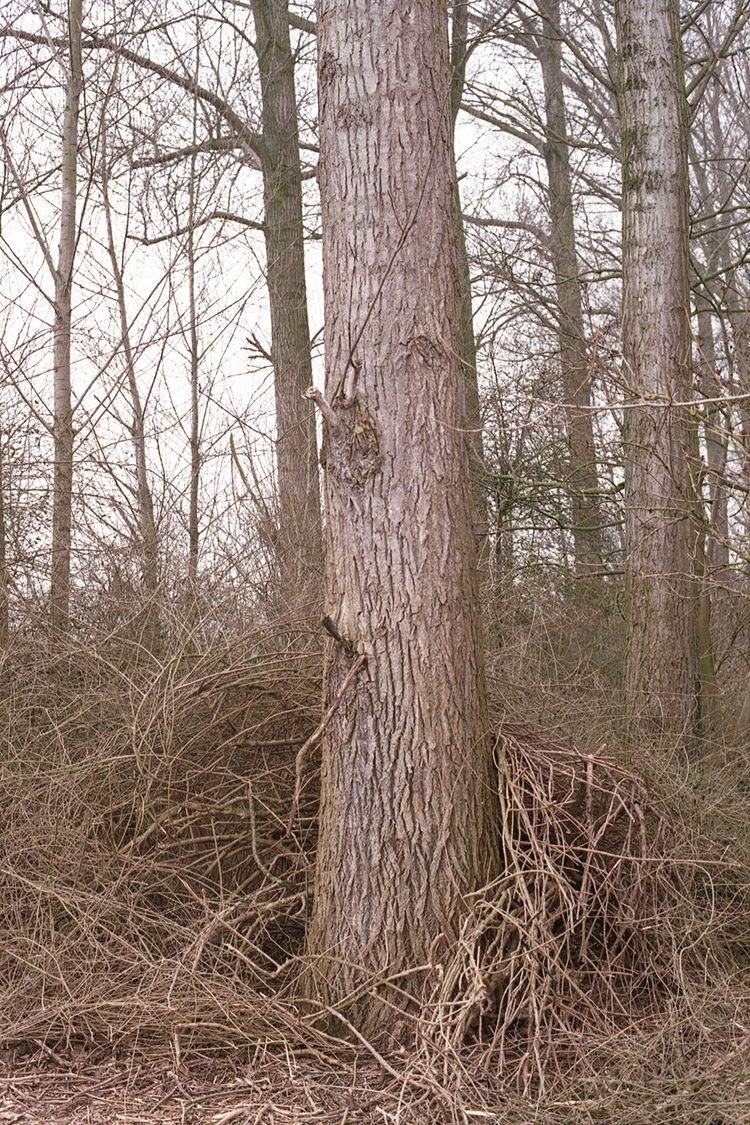 Land-water-trees - photography, filmphotography - glennvanvredegem   ello