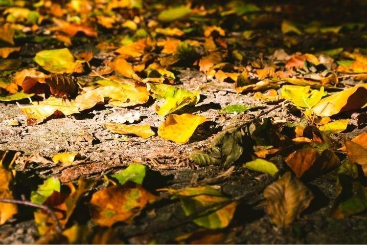 . Visit portfolio - photography#nature - mobilshots | ello