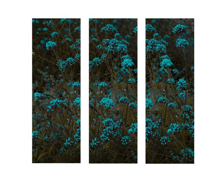 Triptych - flowers, photography - alda_kw | ello