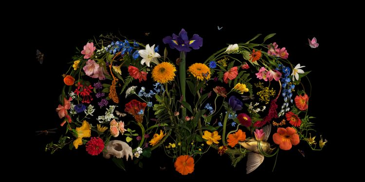 Cycles - vanitas, composite, flowers - bespokephoto | ello