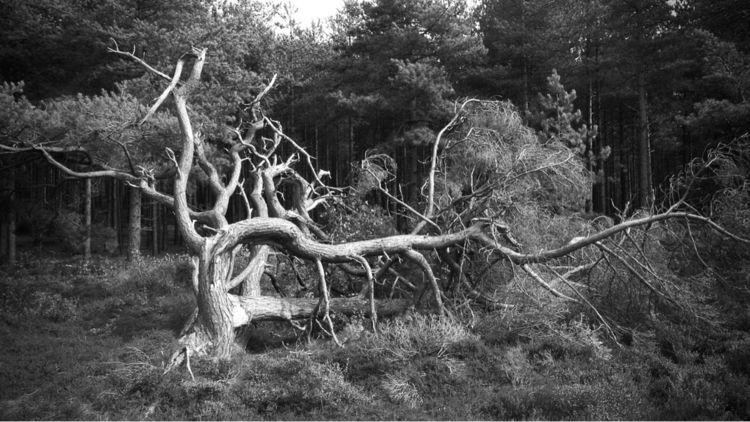 Untitled, Woods - intothewoods, woods - petarmilic | ello