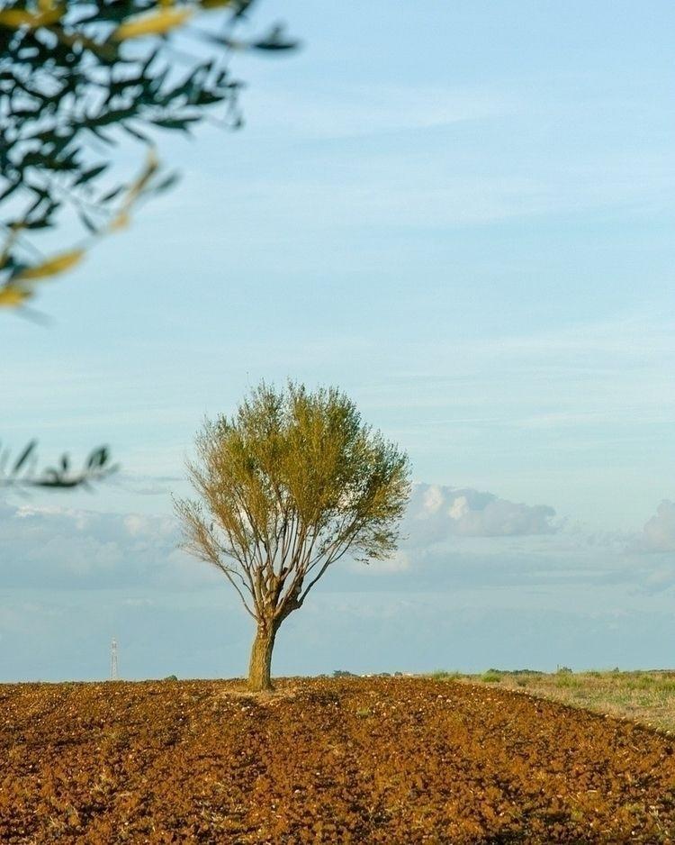 trees antennas facing cosmos - nature_photography - gavinobazzoni | ello