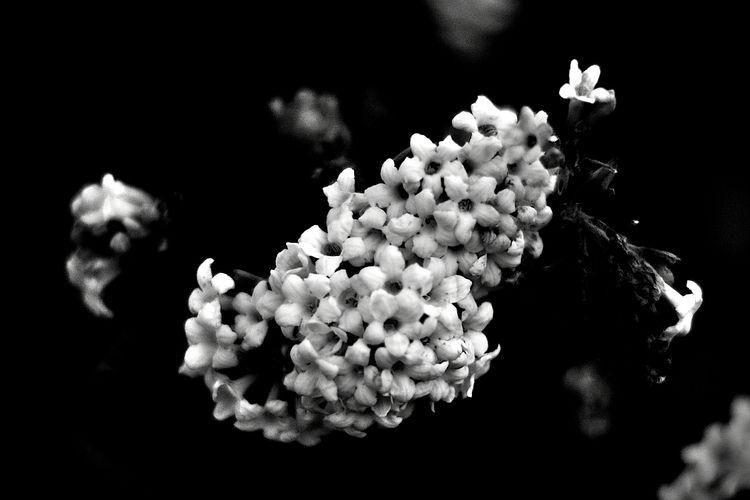Botanical Monochrome 5752 - flowerphotography - dorian-stretton | ello