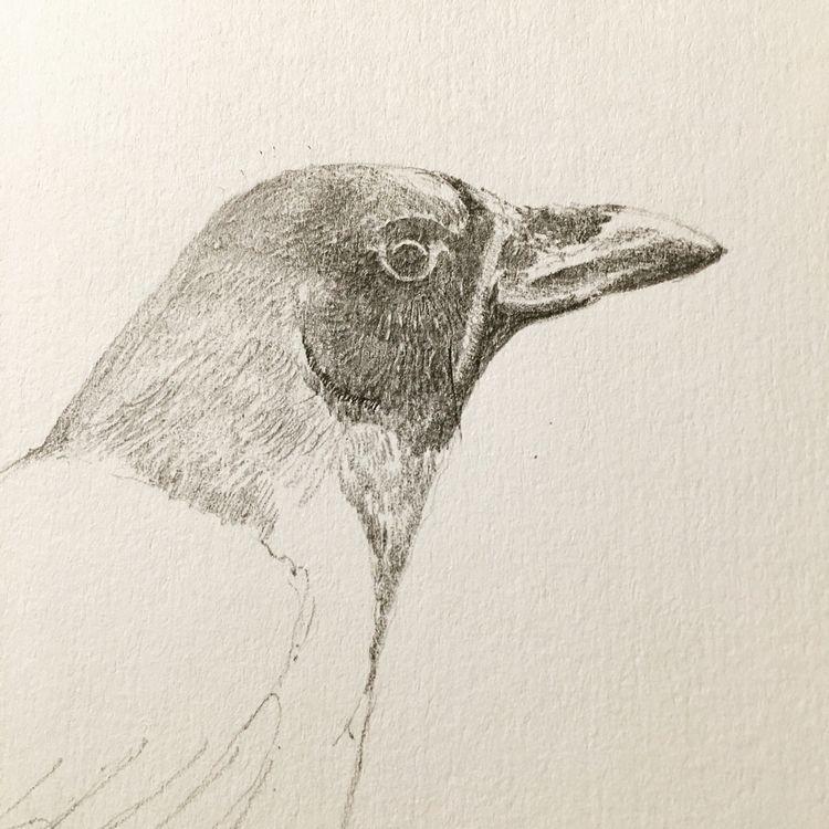 11 ? Crow - illustration, sketch - mtncycle | ello