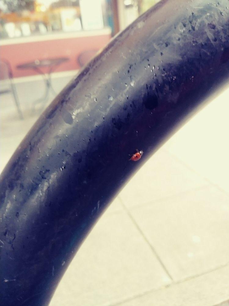 Smol, red black - rylrosenquist | ello