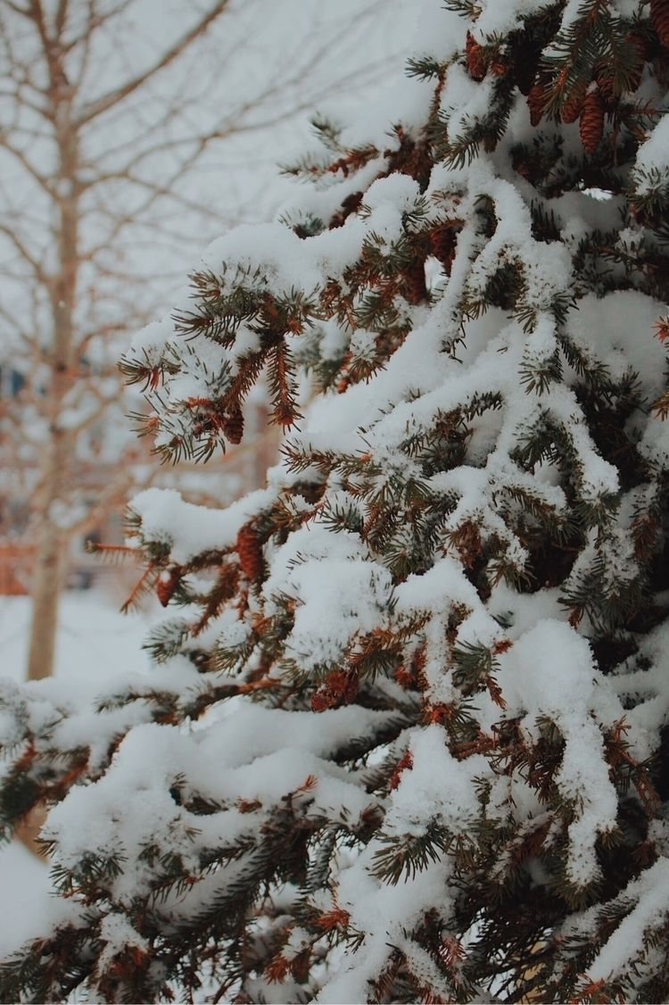 snow day Edmonton, Alberta - winter - janellem | ello