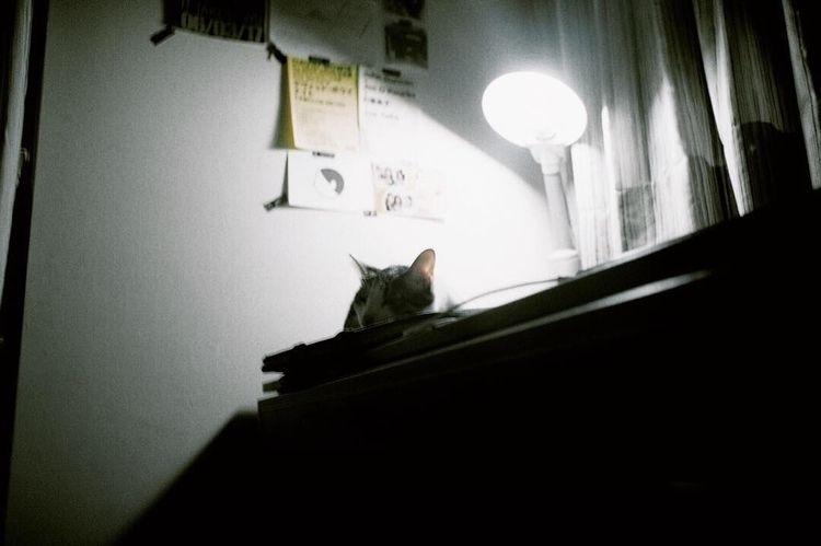 film, nikonfm, catlover - ucchen | ello