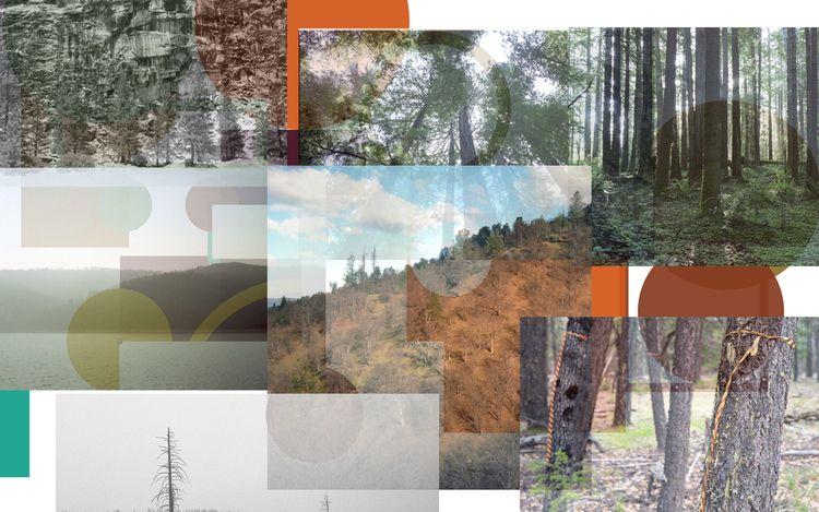 35mm, 120mm, processing, nature - biosfear | ello