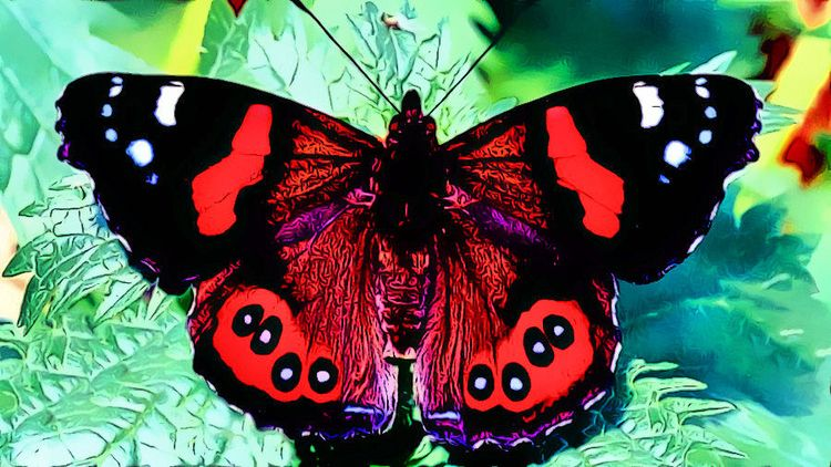 Butterflies Morphing Page: Musi - drakre52 | ello