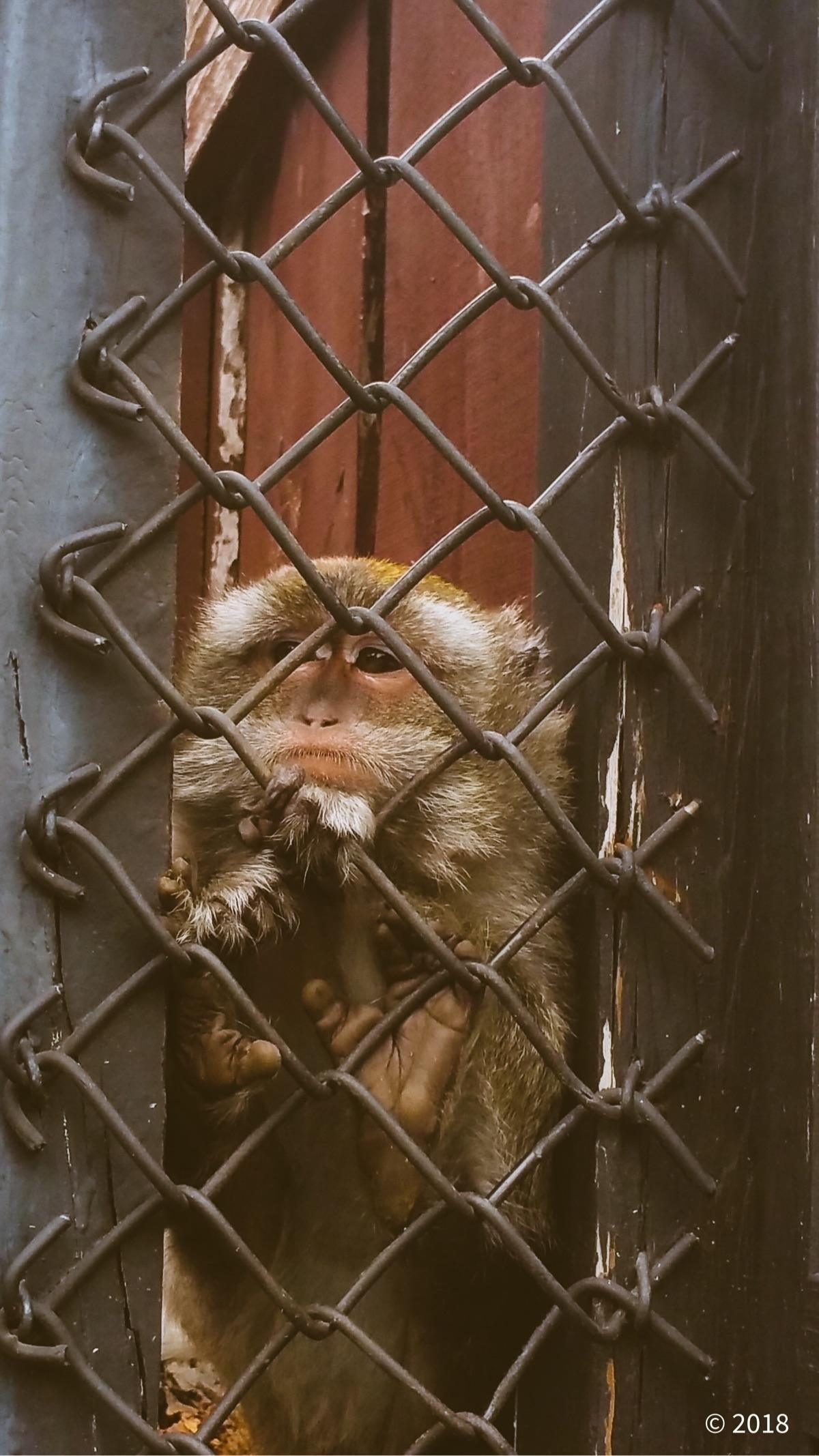 Sad captivity - jillmackin | ello