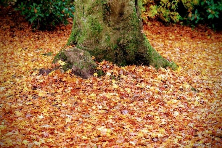 Fallen. weeks - llamnuds, leaves - shaundunmall | ello