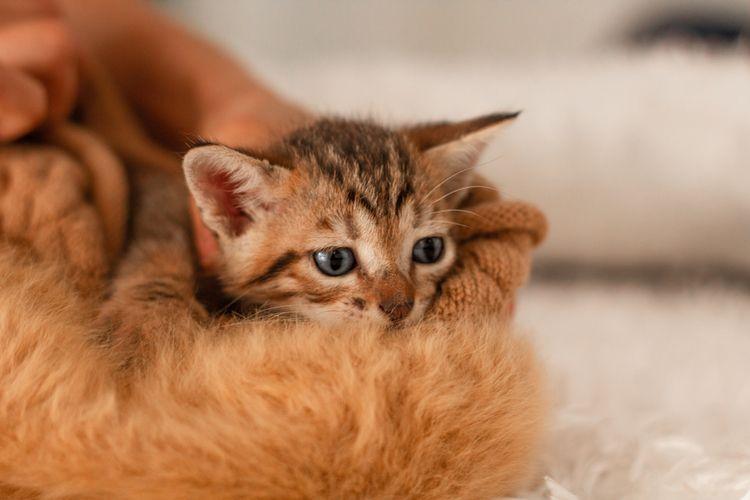 newbornpet, newborn, kitten, newborncat - meneguecoph | ello