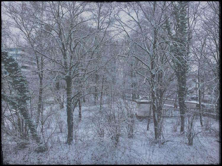 snow morning, yesterday - iPhone - christofkessemeier | ello