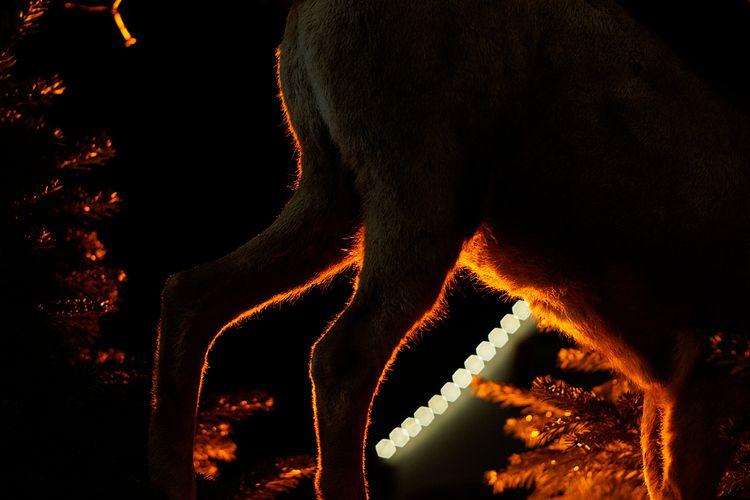La chasse - photography, animals - marcushammerschmitt | ello