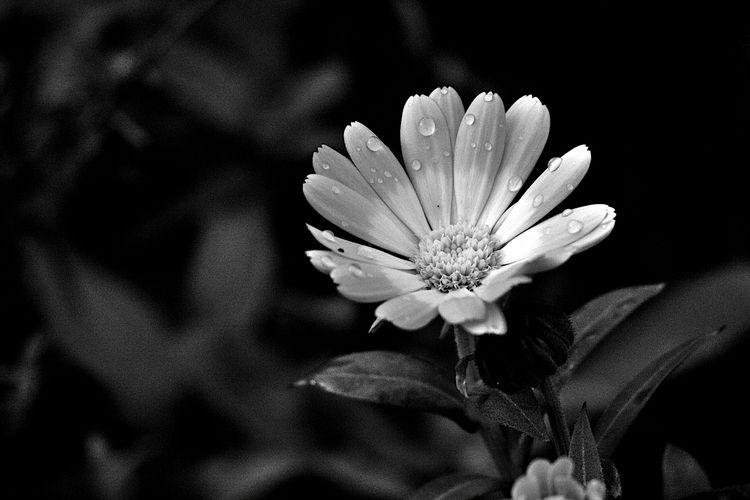 Botanical Monochrome 5796 - flowerphotography - dorian-stretton | ello
