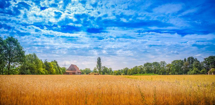 Summerfield - summer, field, summerfield - ingomenhard | ello