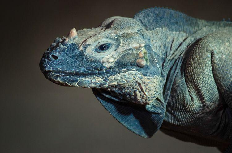 dragon - photo, photography, animal - ingomenhard | ello