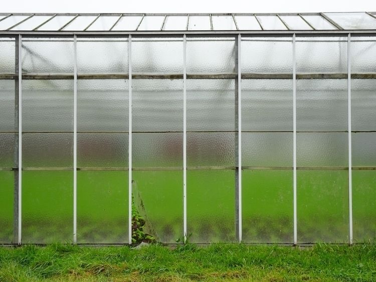 greenhouse, photography - peter_carly | ello