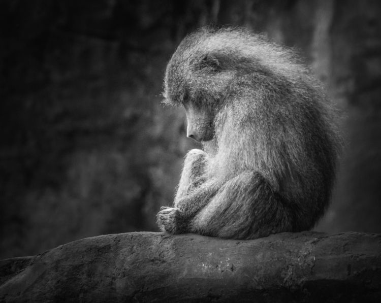Lonely monkey scene shows lonel - ingomenhard | ello
