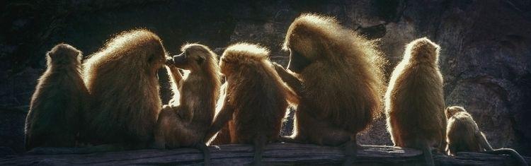 Sunshine Monkeys - photography, photo - ingomenhard | ello