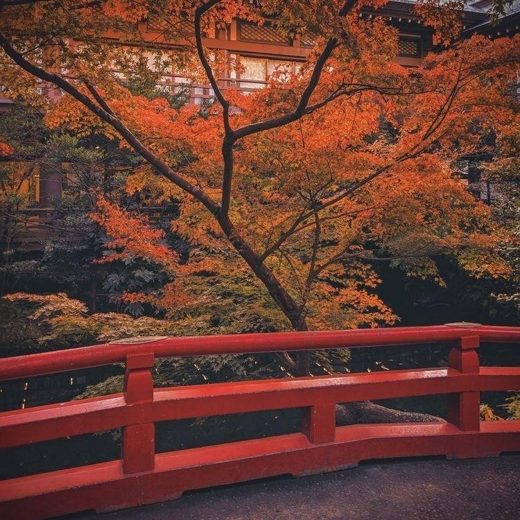 bridge find fall colors...  - kamakura - fokality | ello