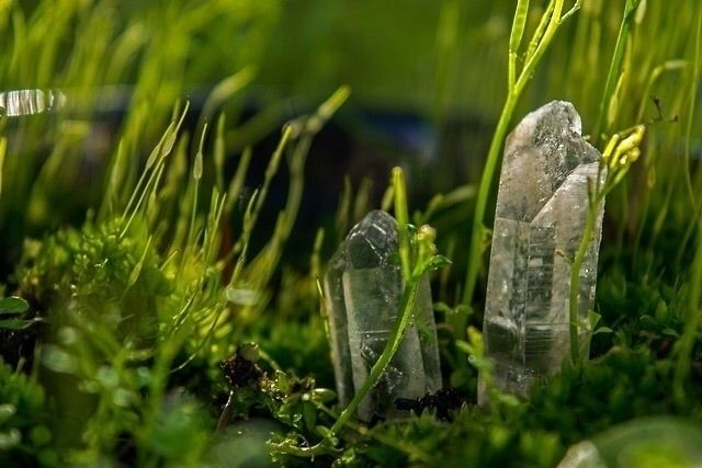 Quartz Garden  - photography, quartz - earthlytouch | ello