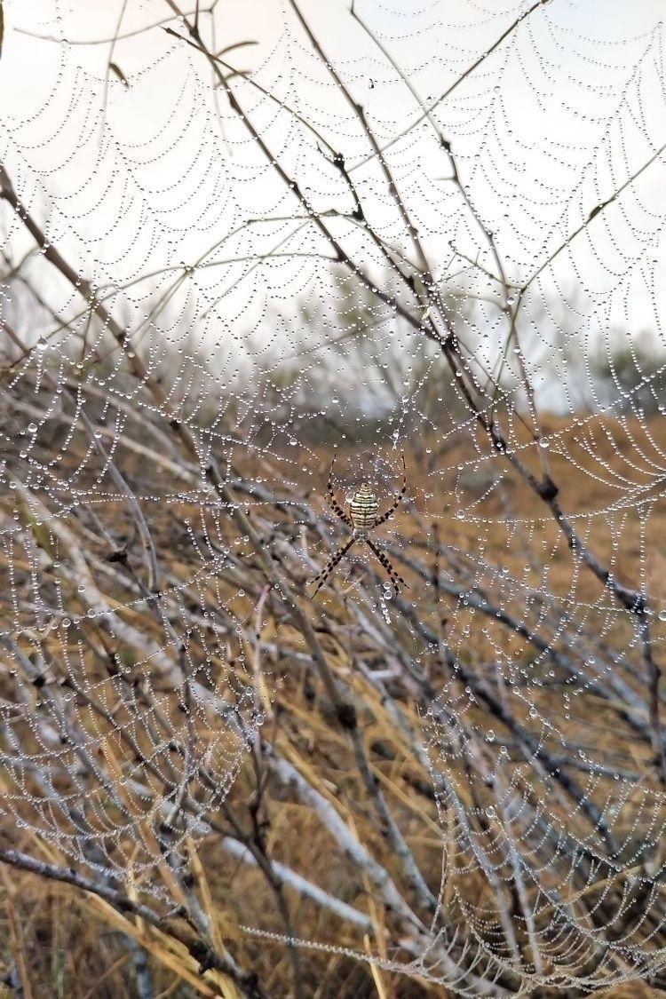 spider, texas, fog, dew, nature - columbuserinchief | ello