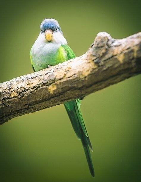 Boss bird - photography, photo, boss - ingomenhard   ello