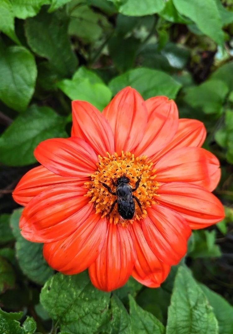 takenbycyberluddite, bee, bumblebee - columbuserinchief | ello