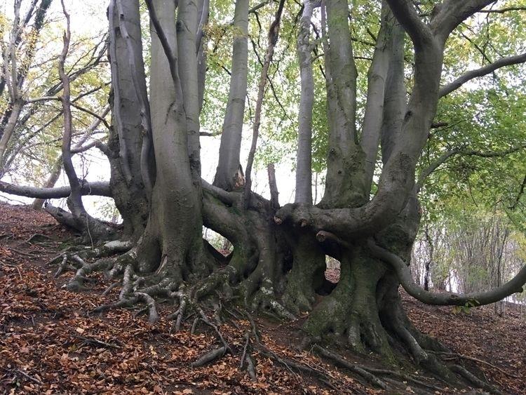 Gothic mask - Beech, gothic, nature - treeturn | ello